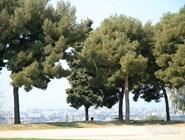 Парк на холме Шато