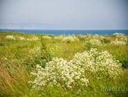 Цветочные луга на берегу моря