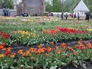 Фестиваль весенних тюльпанов в пригороде Вильнюса