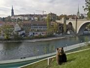 Медведь в зоопарке Берна