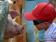 Общение с животными - главная часть фестиваля