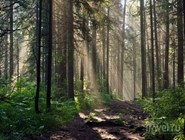 В лесах под Красноярском