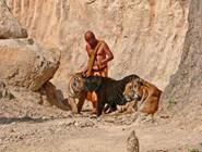 Храм для тигров - прогулка с тиграми ©Kitya Karlson