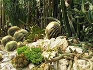 Коллекция кактусов в Никитском ботаническом саду