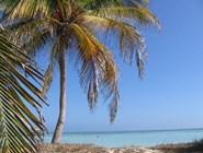 Пальма на побережье, Кайо-Гильермо