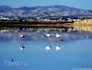 Розовые фламинго на Соленом озере