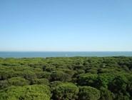 Эраклея: Хвойный лес
