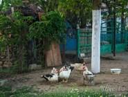 Картины деревенской жизни