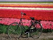 Цветочные поля и велосипед