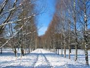 Аллея в парке Горок Ленинских