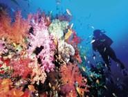 Дайвер у мягких кораллов в Красном море, Марса-Алам