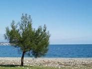 Берег Черного моря в Пицунде