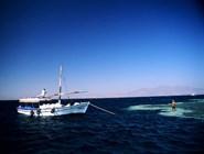 Катер в Красном море