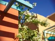 Отель Sheraton - в цветах и зелени, Эль-Гуна