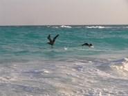 Пеликаны у берегов Кайо-Ларго