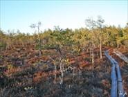 Тундровый лес