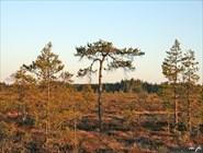 Лапландский пейзаж