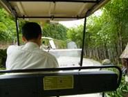 Электромобиль (багги) для перемещения по территории