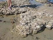 Морепродукты растут на камнях