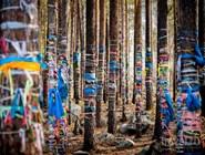 Священный лес в Аршане