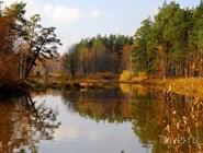 Осень в Окском заповеднике