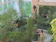 Зимний сад санатория «Малахит»