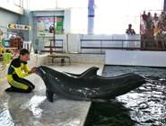 Выступление дельфинов в Карадагском дельфинарии