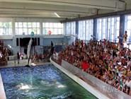 Представление в Карадагском дельфинарии