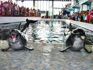 Карадагский дельфинарий