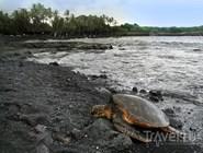 Вулканический пляж Panaluu