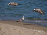 Песчано-ракушечный пляж, Приморско, Болгария