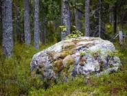 Лес на острове Касьян