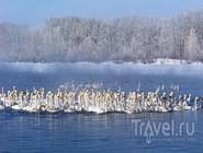 На озере Лебедином