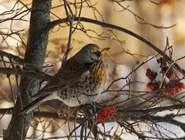 Птица в Окском заповеднике