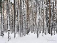 Лес возле Кратовского озера