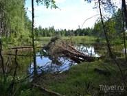 Пруд у деревни Семеновской