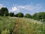 У реки Клязьма в районе села Городок