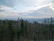 Вид на лес вокруг Dolder Grand