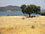 Пейзаж в центральной Португалии