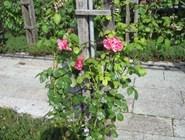 В саду Миллесгорден