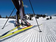Фольгария - мекка беговых лыж