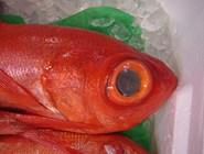 Рыба на рынке Цукидзи