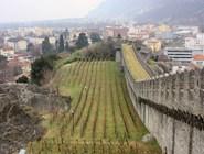 Виноградники у стен замка Кастельгранде