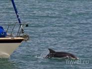 Дельфин в гавани Ньюквей