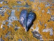 Ракушки на камне