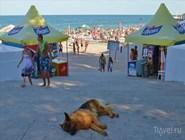 Отдыхающий на пляже