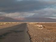Тучи над пустыней Намиб