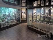 В Музее природы