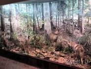 Диорама в Музее природы