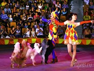 На сцене самарского цирка
